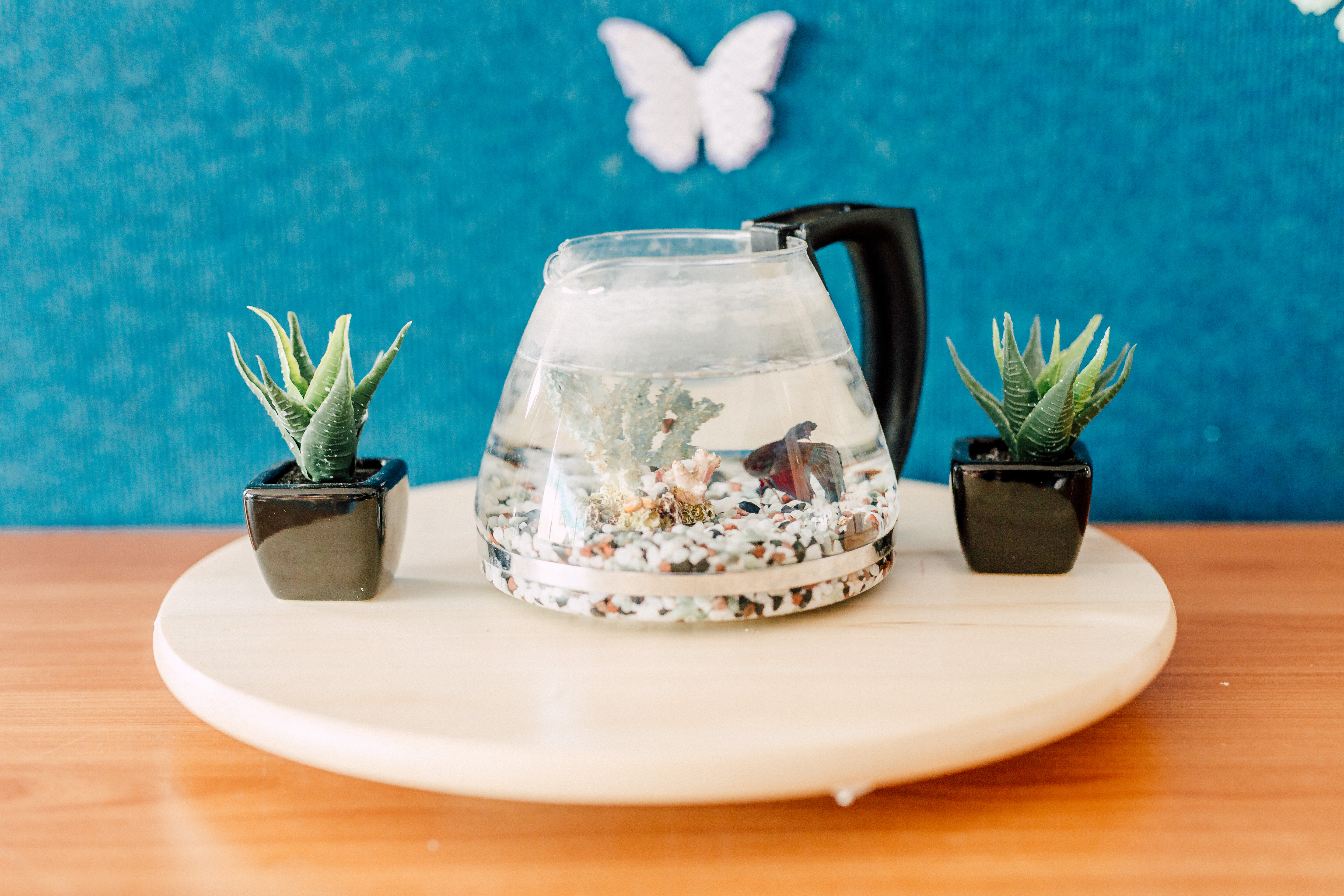 Fish bowl and plants at Kids Care West Kinross